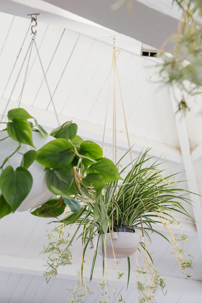 Ro Co ceiling plants
