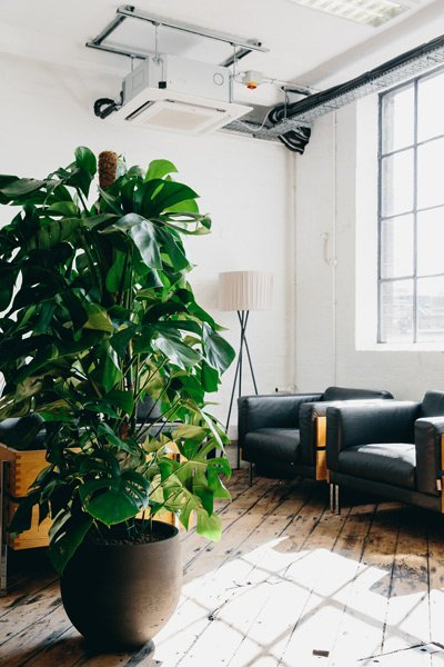 Potted plant bringing life to the space